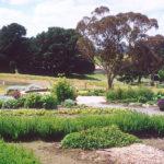 claret-ash-farm
