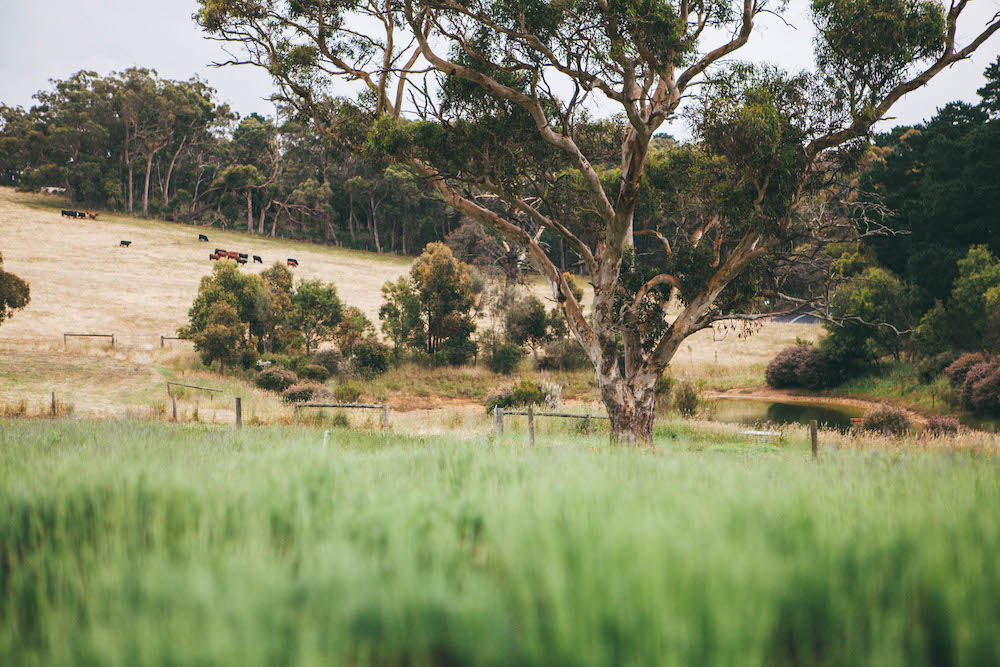 Rich Soil at Claret Ash Farm