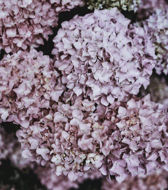 Janesce Moisturisers | Skincare NZ | Plant Based